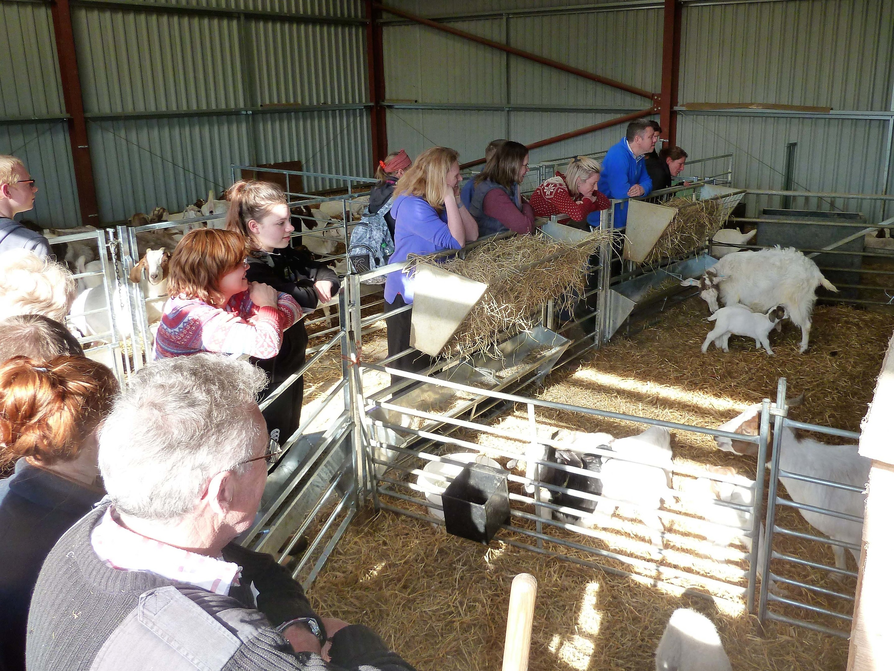 Drummuir Estate hosted goat keeping courses.