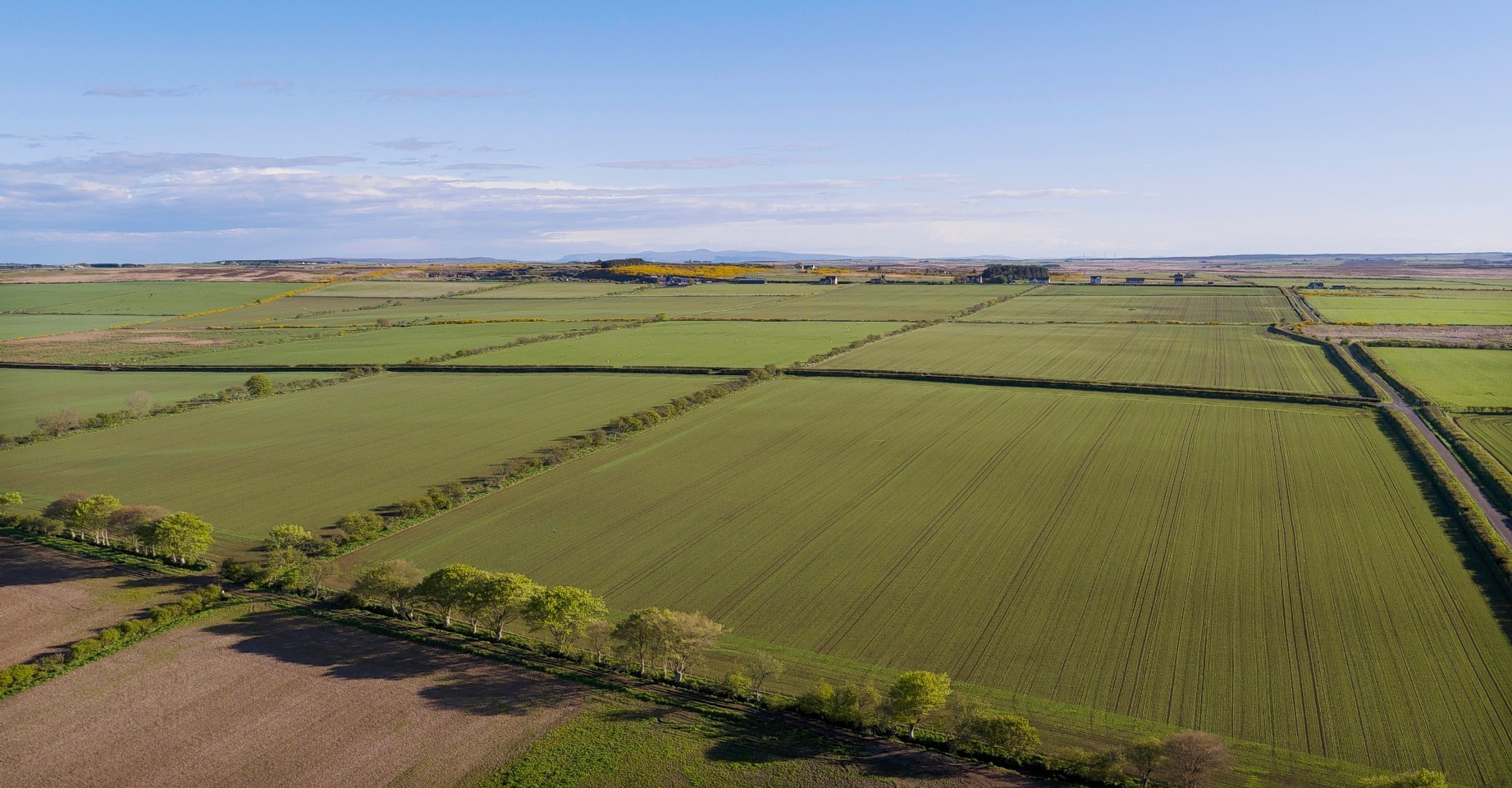 Some of the farmland at Watten Mains