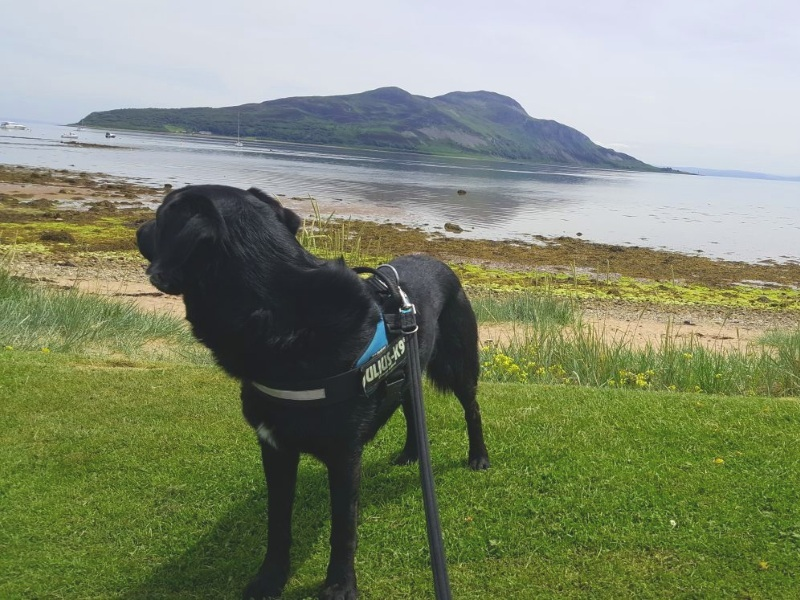 Harvey the dog takes on Arran - I'll Be Back