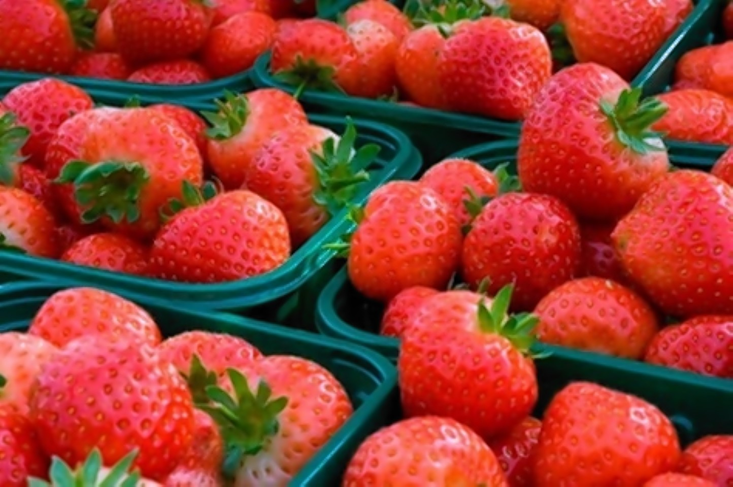 Many farmers in the north and north-east run pick your own soft fruit enterprises.