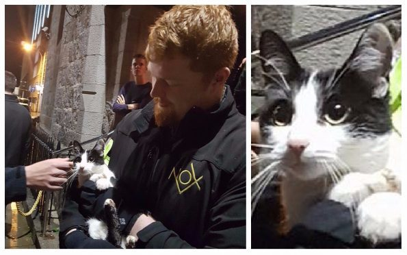 Security manager Lewis Thomson found the kitty trying to sneak into his nightclub