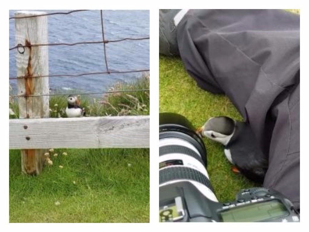 The special moment happened at Sumburgh Head