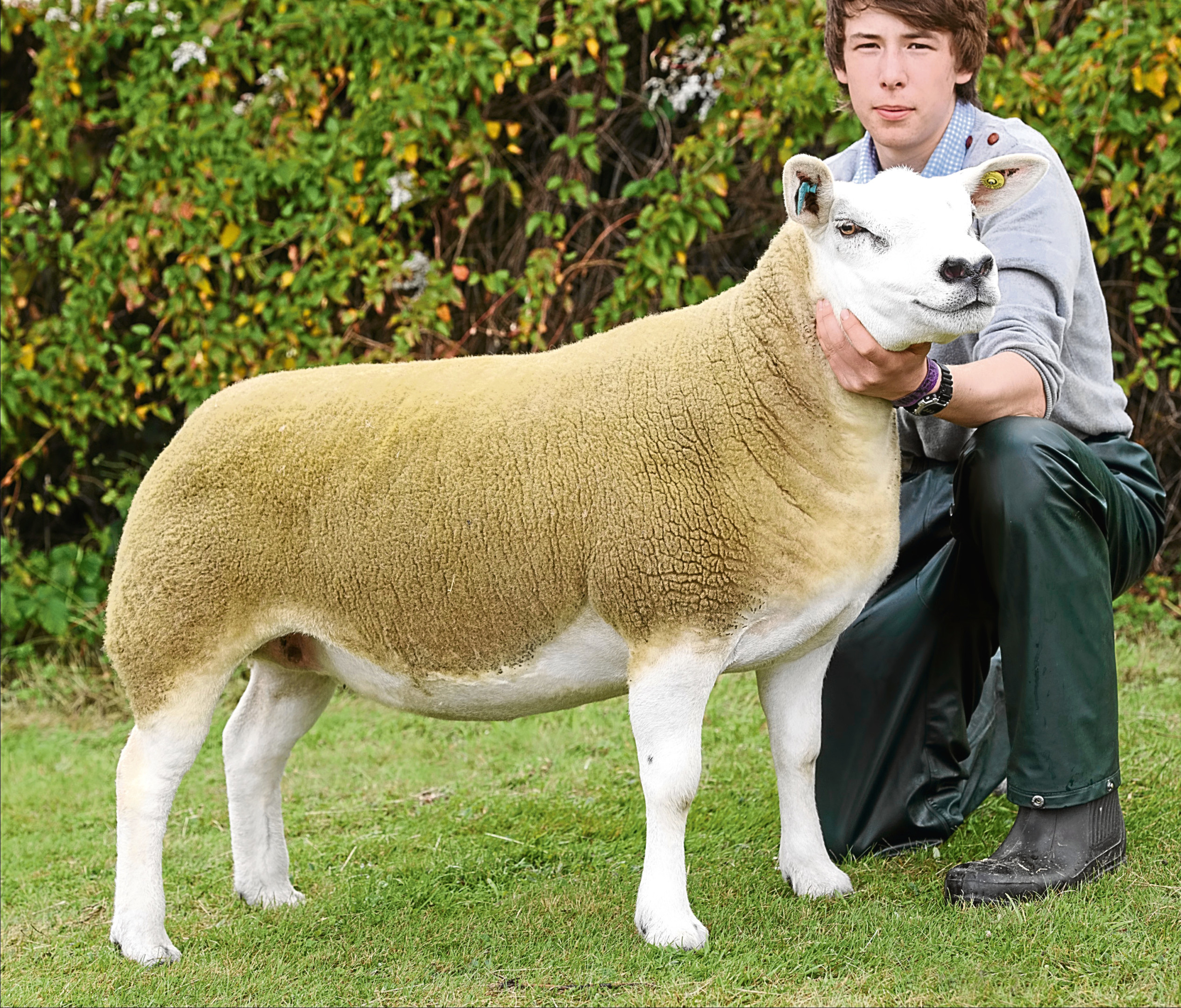 The sheep interbreed and Texel champion from Jemma Green at Corskie.