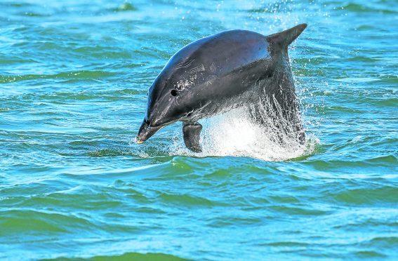 Dolphins at Greyhope Bay