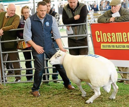 Stuart Wood selling one of his Beltex tup lambs at last year's sale.