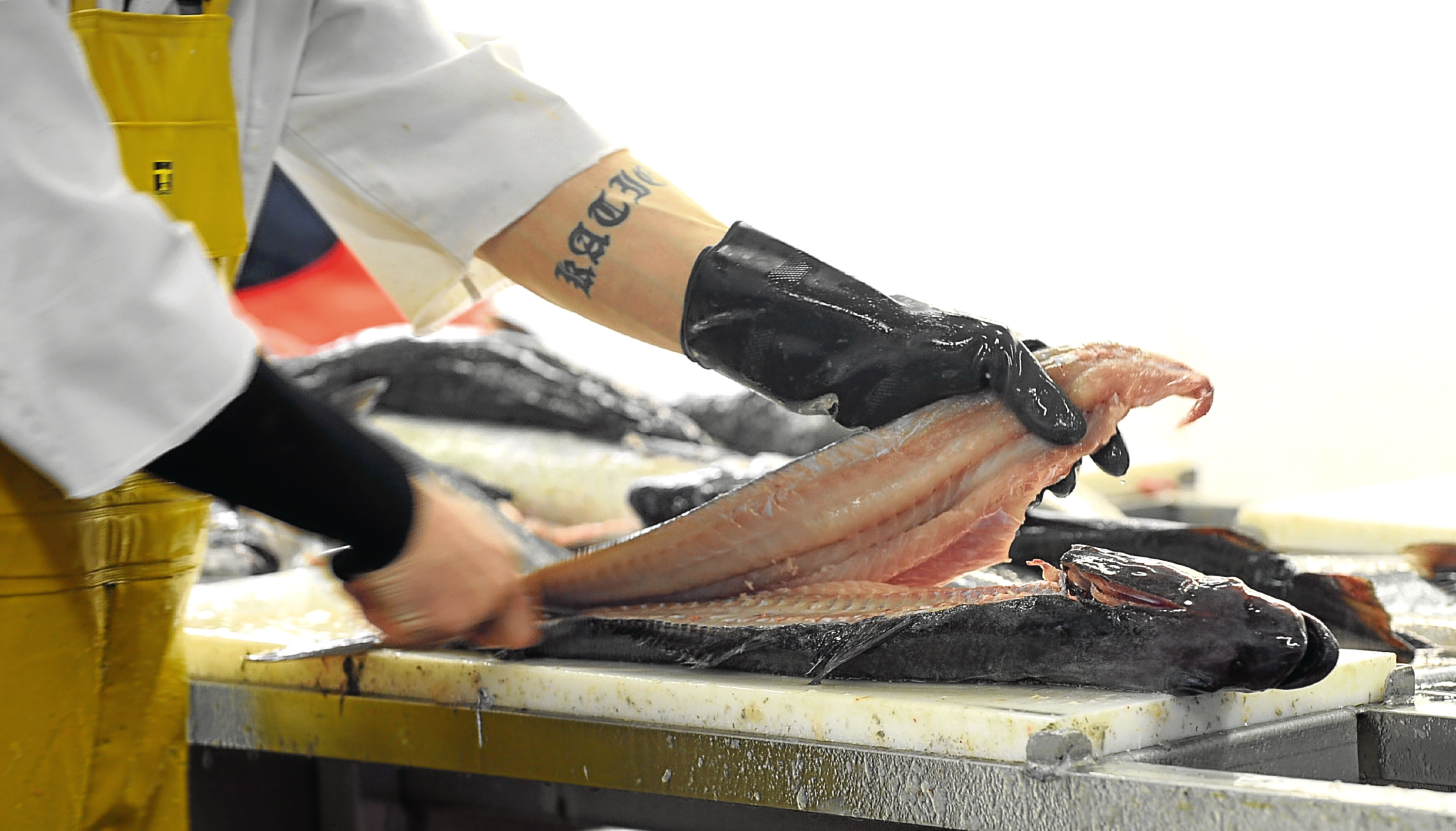 Questions have been raised over a fund for fish processors.