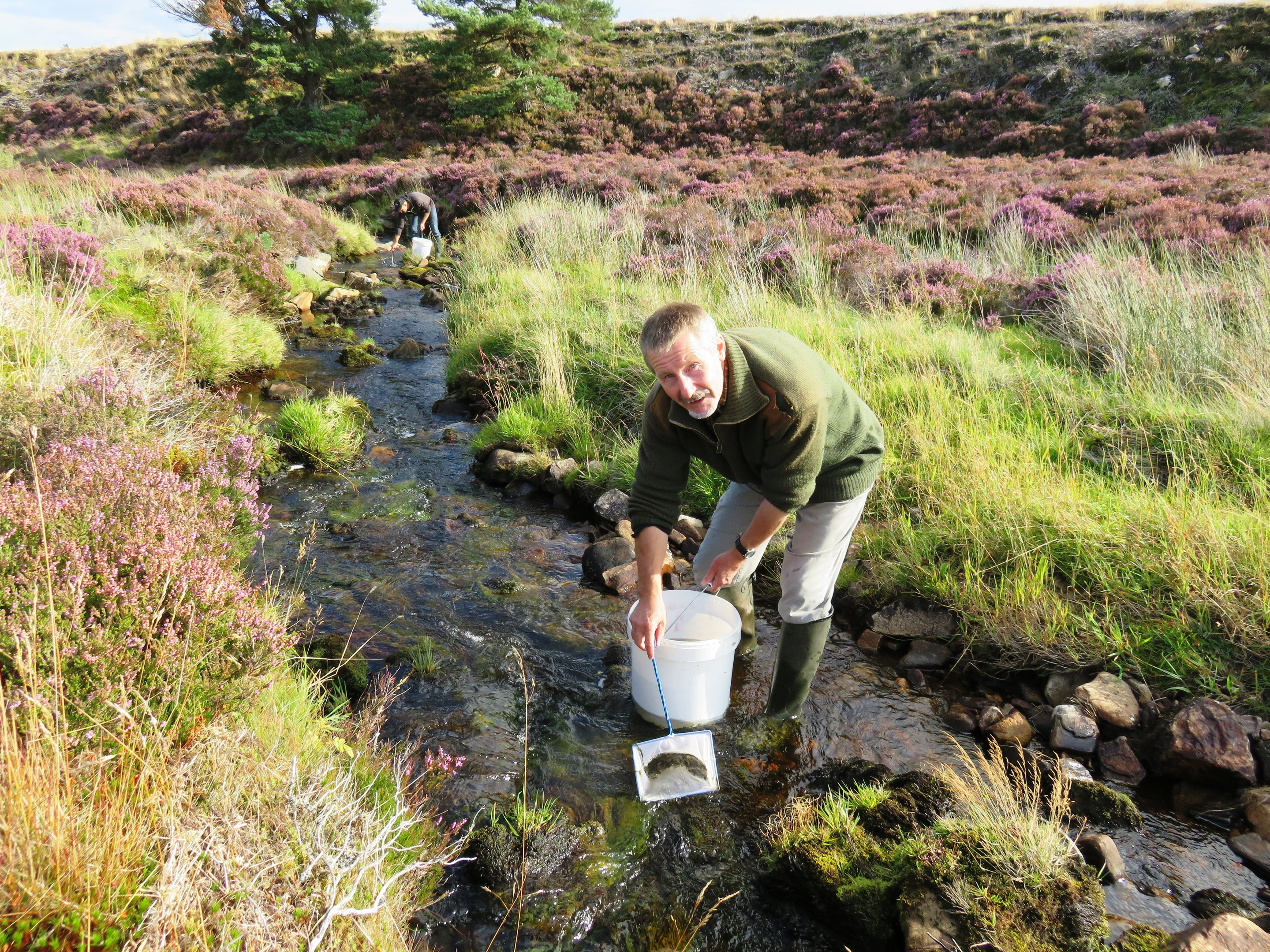 Volunteer Ian McMaster helps stock the Tommore Burn at Ballindalloch with salmon fry.