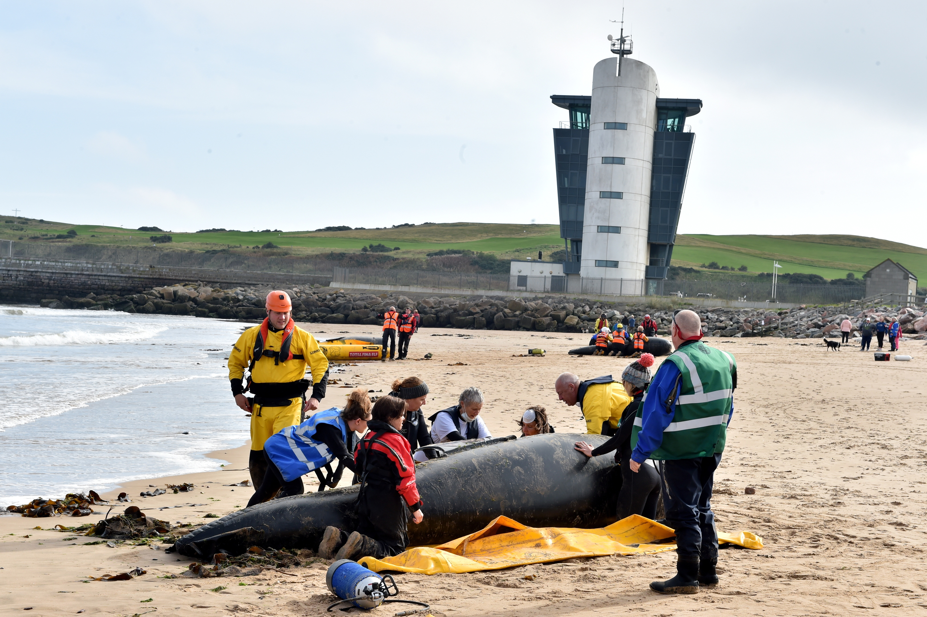 British Divers Marine Life Rescue (BDMLR) held a mass stranding rescue exercise at the Footdee end of Aberdeen Beach on saturday, where volunteers train to rescue stranded marine animals.  Picture by Kami Thomson    23-09-17