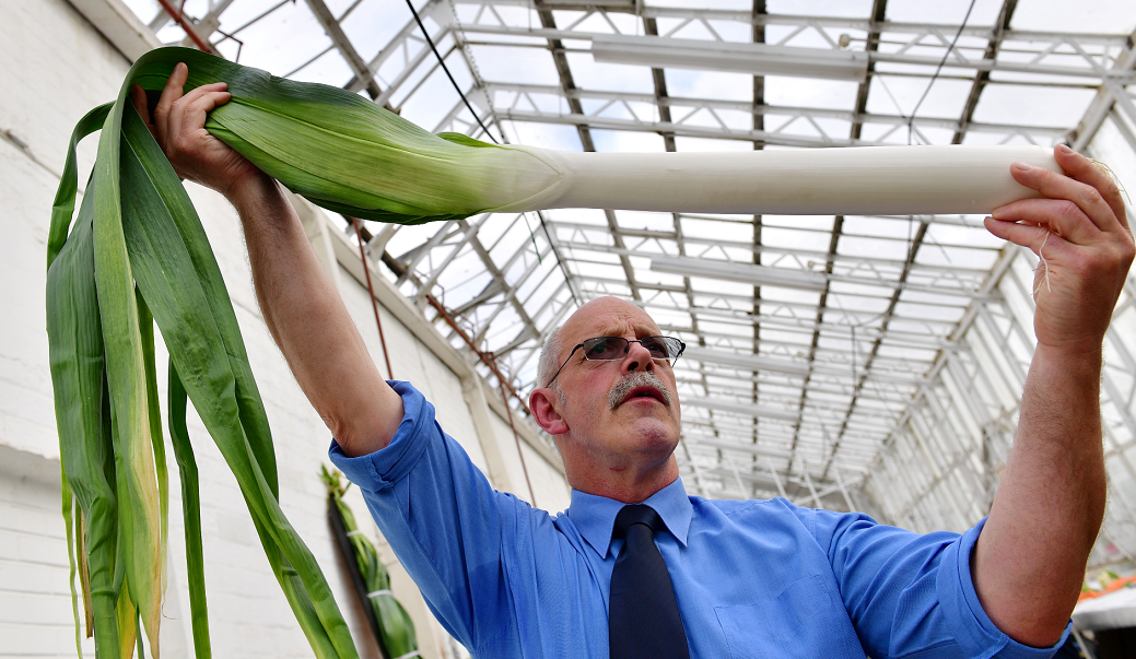 Judge John Martin looking over the entrants to the Grampian District Association of the National Vegetable Society annual show and competition at the Winter Gardens, Duthie Park, Aberdeen.     Picture by Kami Thomson