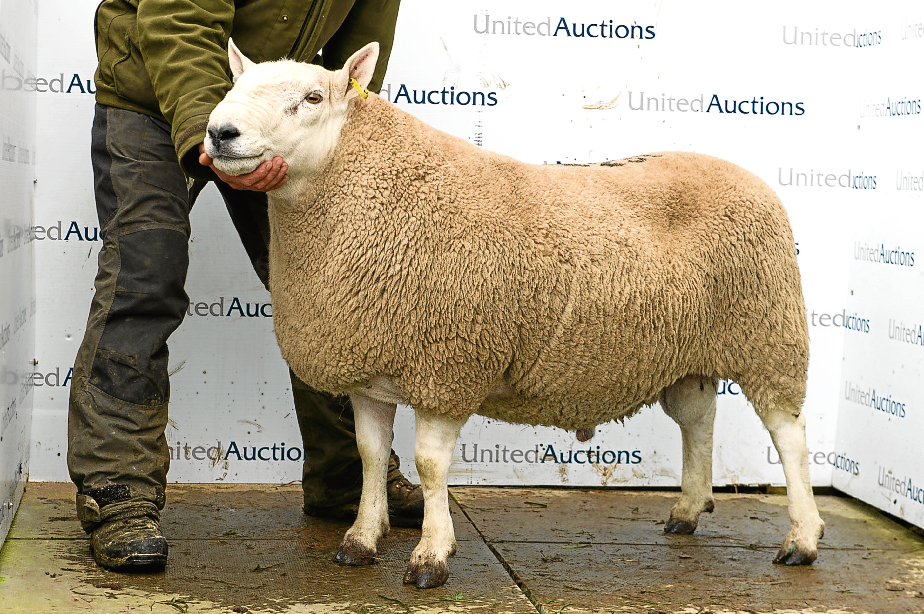 The £13,000 sale topper from Suisgill