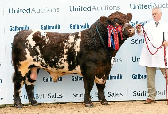 Shorthorn bull Grovewood Jackson from Chris Mallaber sold for 12,000gn