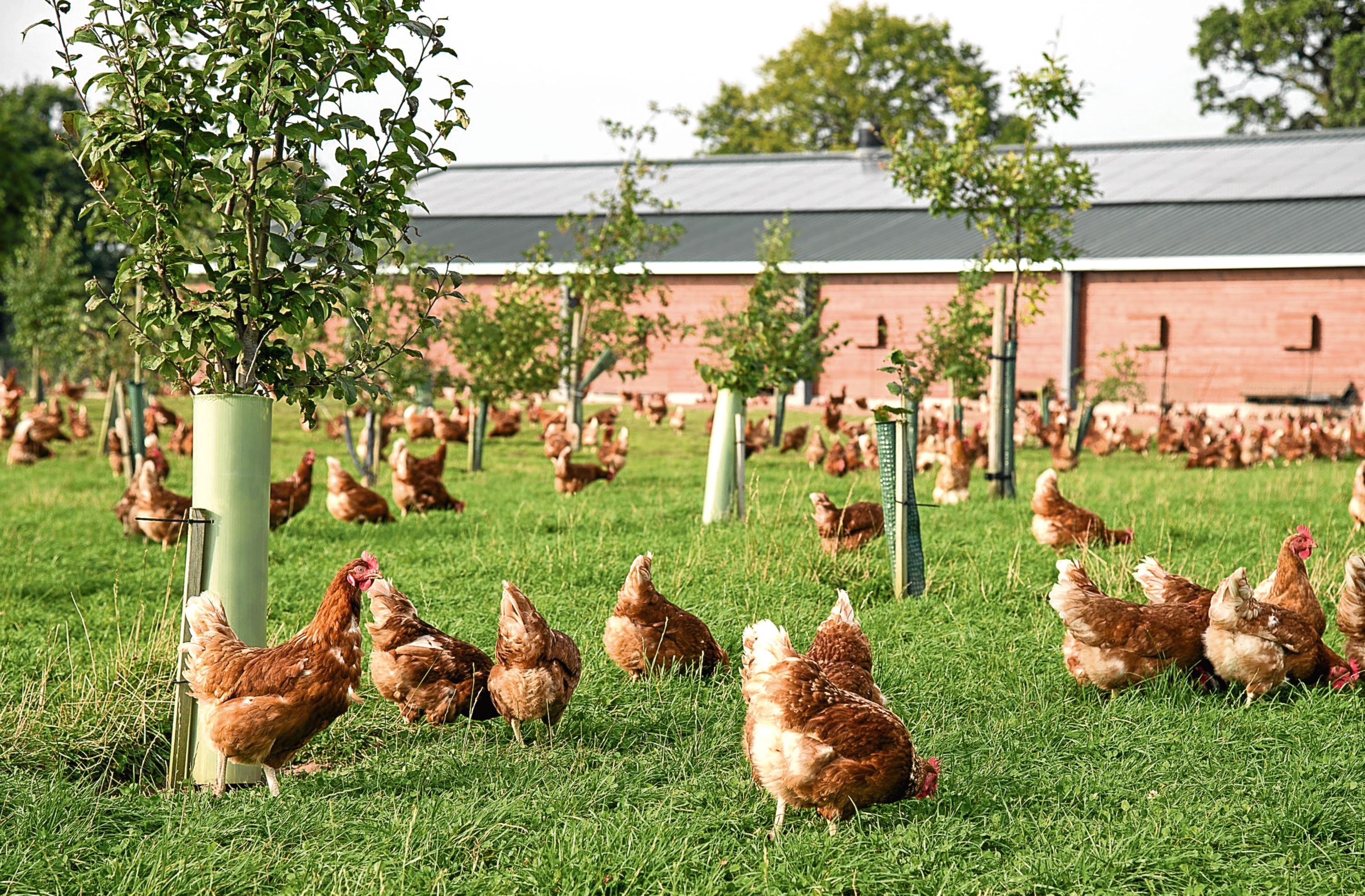 The new rules apply from Monday.    free range eggs  As British Egg Week 2016 gets underway, a OnePoll survey has shown that 78% of UK shoppers who buy free range eggs are happy to pay a premium for them.  Even Brits who usually buy a value egg agree that free range eggs should be priced higher than those produced by birds which dont go outside.