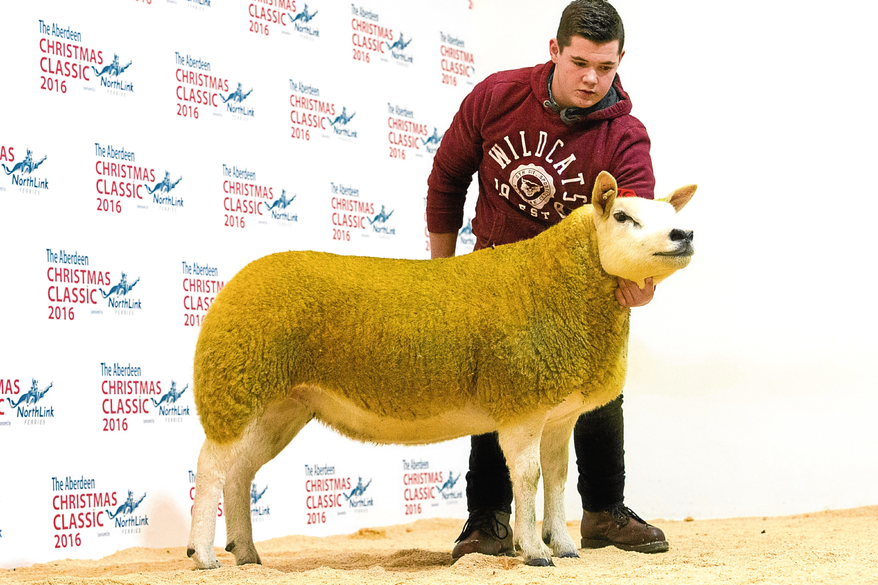 Last year's sheep sale topped at 4,200gn for a Texel from Robbie Wilson's Milnbank flock