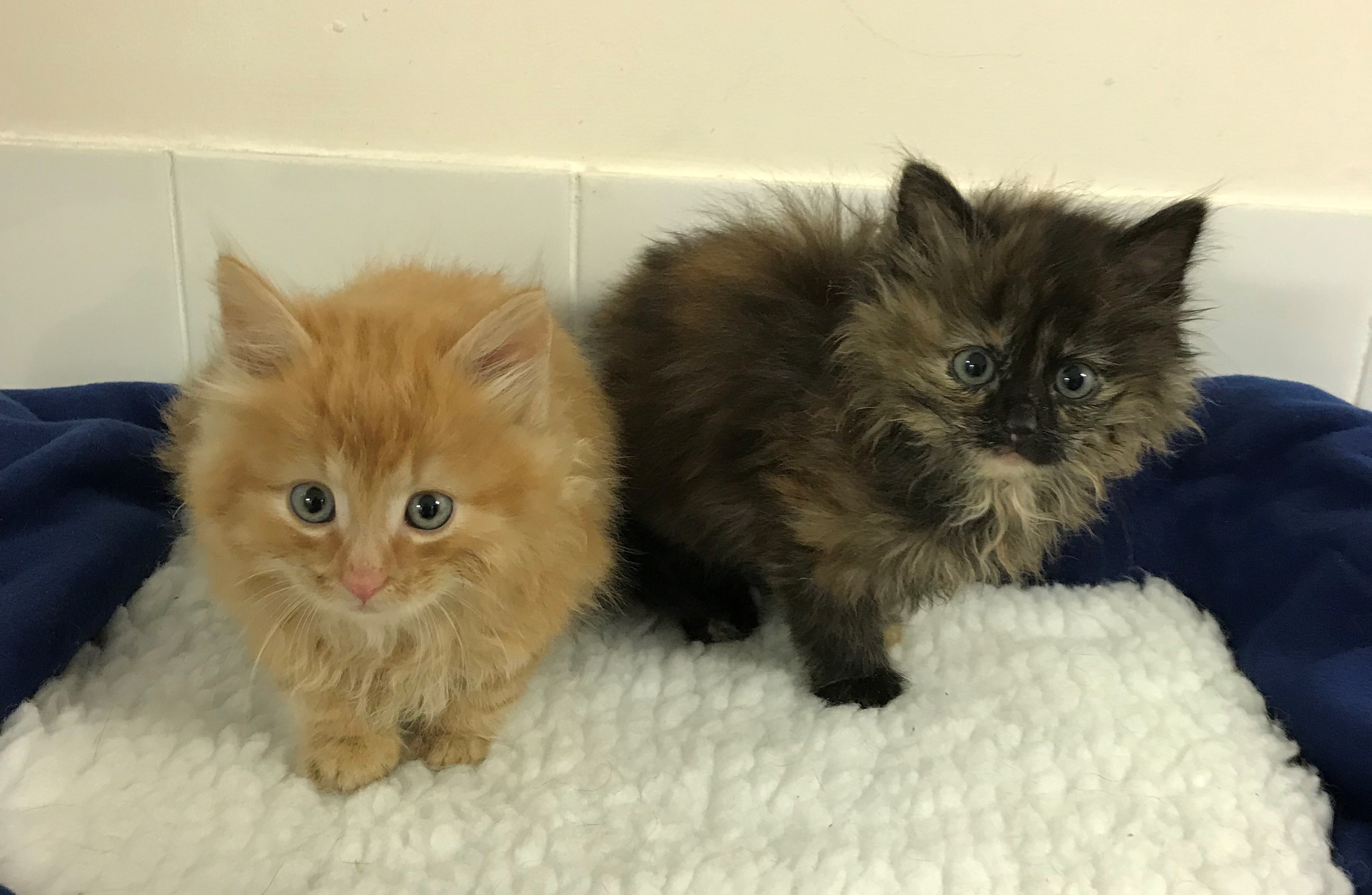 Kittens Harry and Meghan are being cared for in Inverness