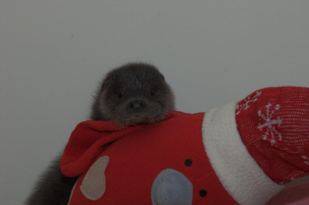 Misty the Otter was rescued last Friday