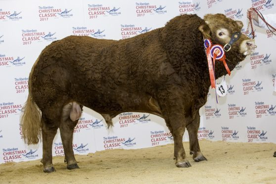 Champion bull Harestone Limit sold for 5,800gn