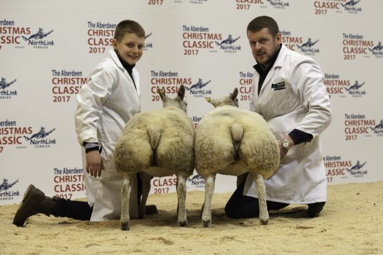 Seth with his champion prime lambs.