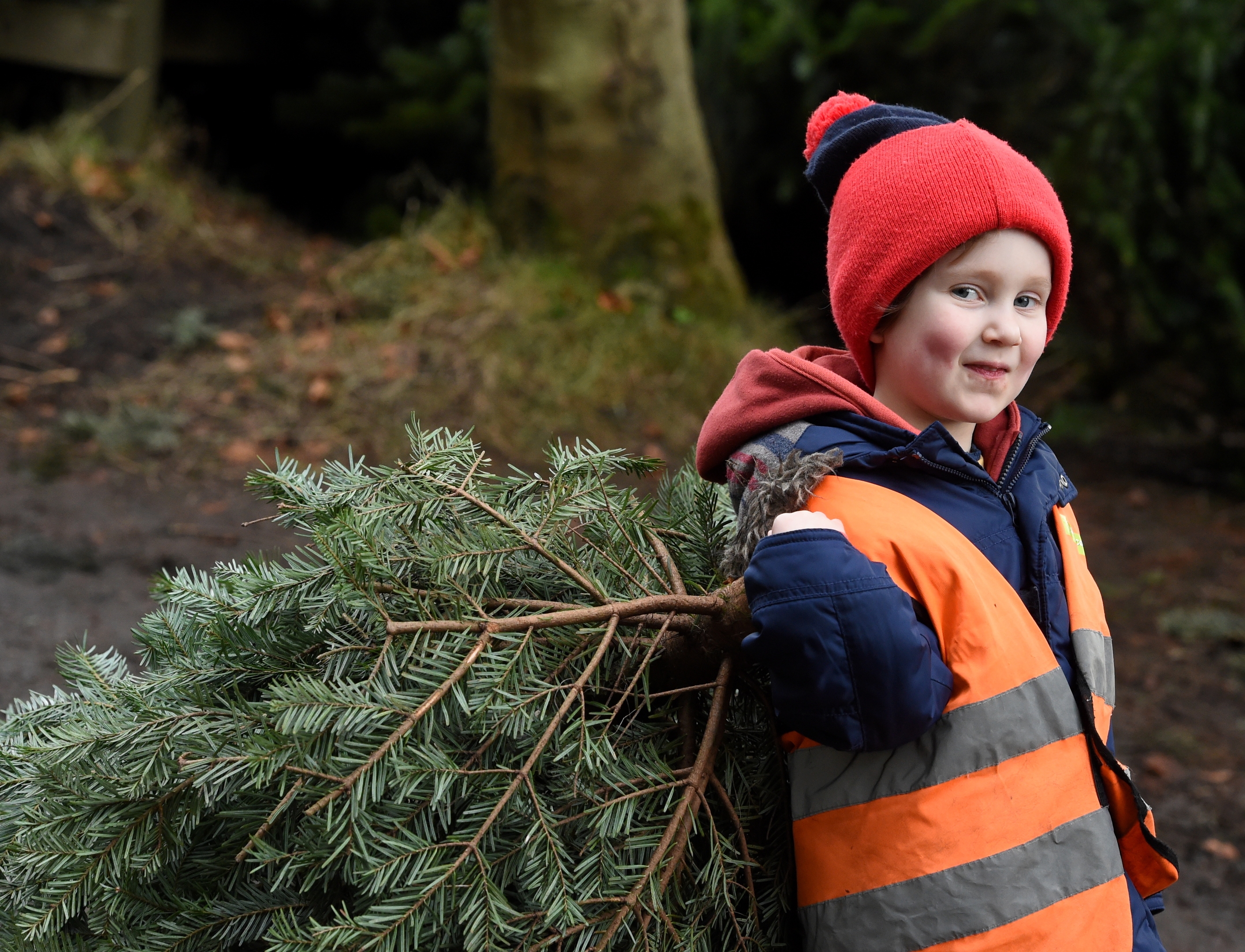 The launch of the christmas tree sales at Tyrebagger, Aberdeen. In the picture is three year old, Laurie Brown, Echt Nursery with his tree.  Picture by Jim Irvine  6-12-17