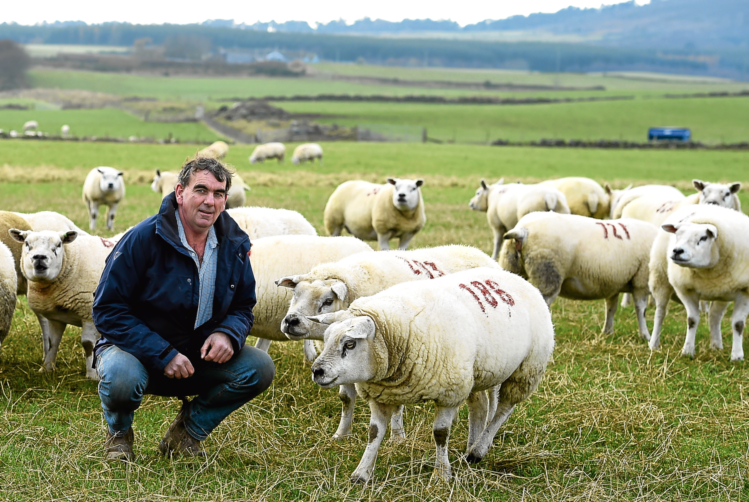 Graham Morrison with some of his Deveronvale flock.