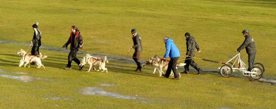 Peter Jones from Market Rasen in Linconshire takes his six dog team for a training run yesterday