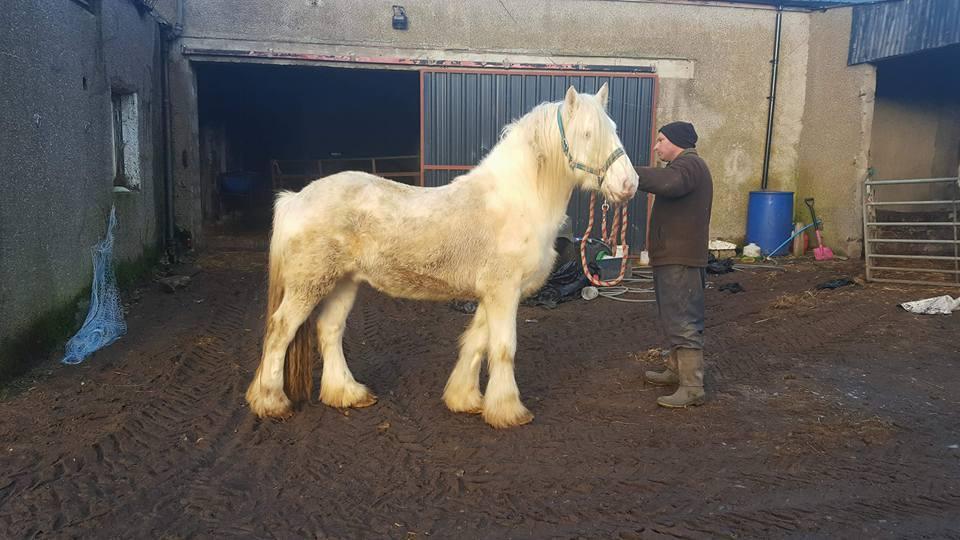 Polo has gone missing from Blackhillock Farm near Knockando.