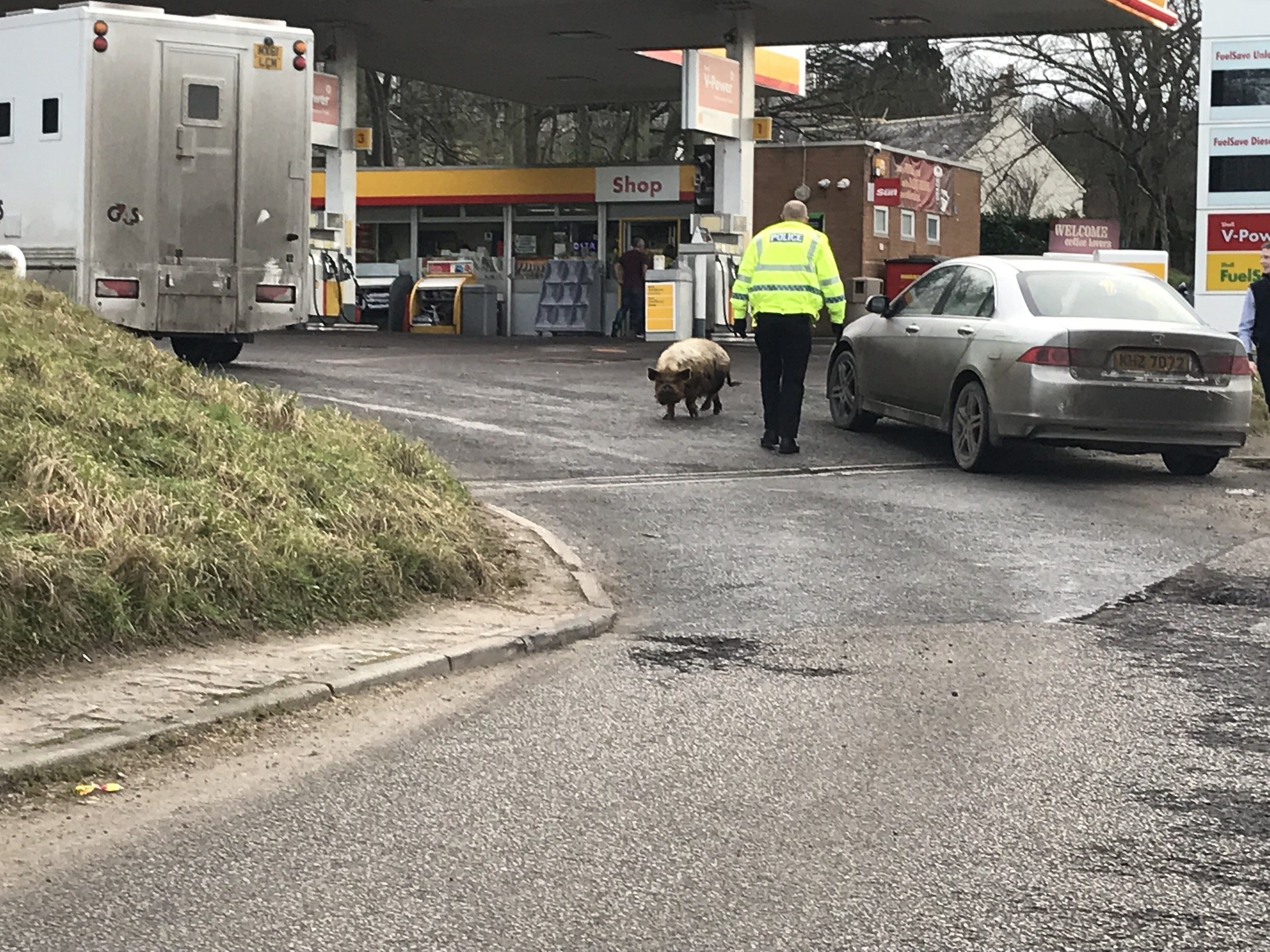 The pig was caught at a petrol station.