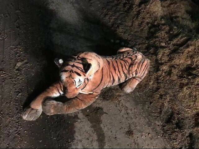 The stuffed toy that a farmer mistook for a real tiger before calling the police.