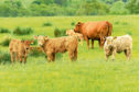 The disease affects various farm animals including cattle, sheep and goats.