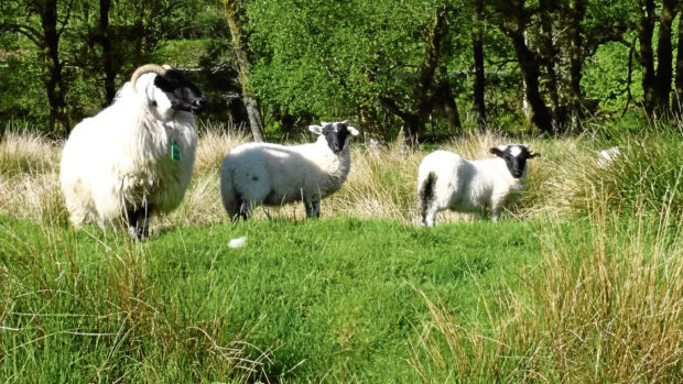 SRUC Kirkton and Auchtertyre research farms