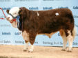 Islavale Heston sold for 24,000gn