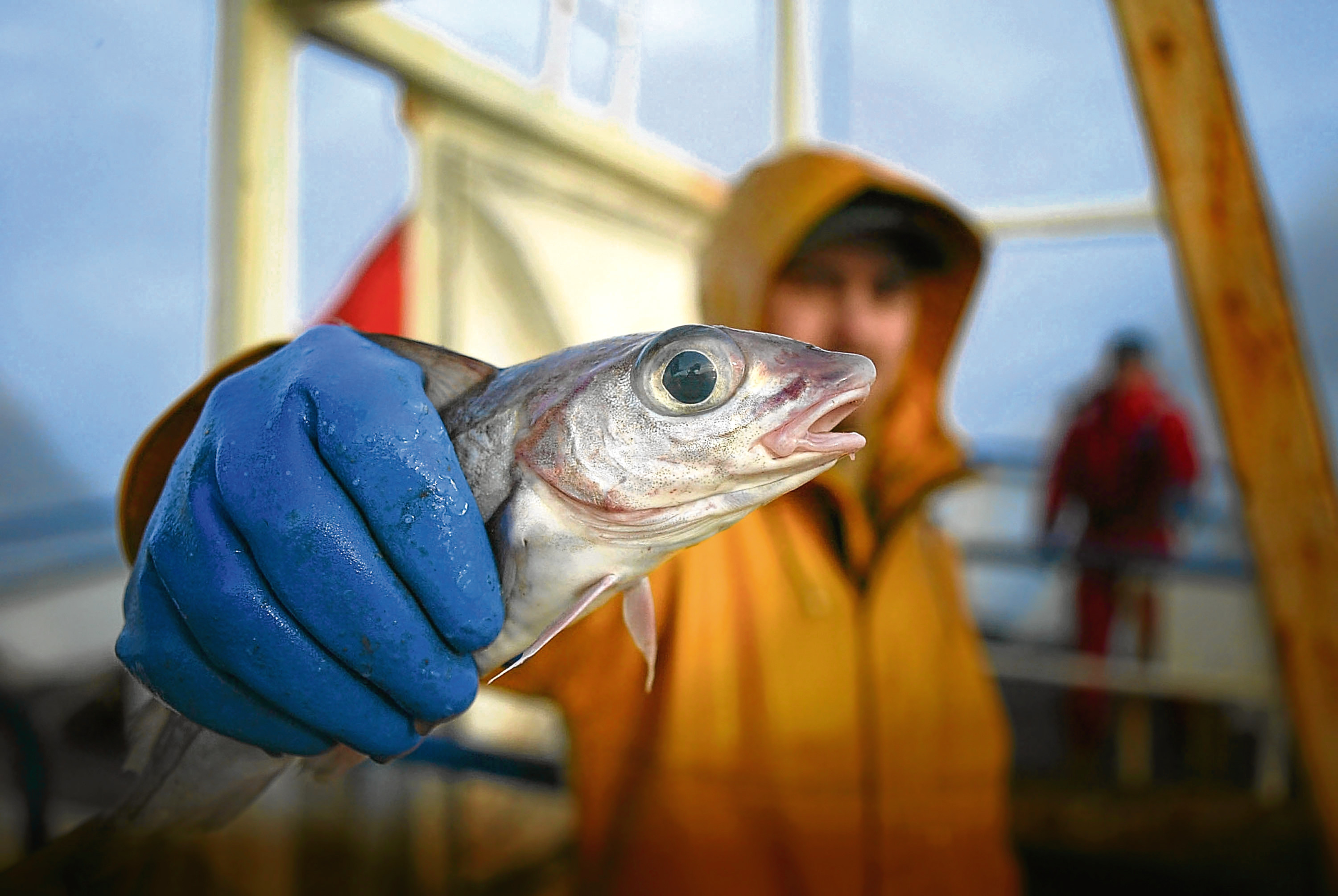 Leading EU fish expert in 'perfect storm' alert
