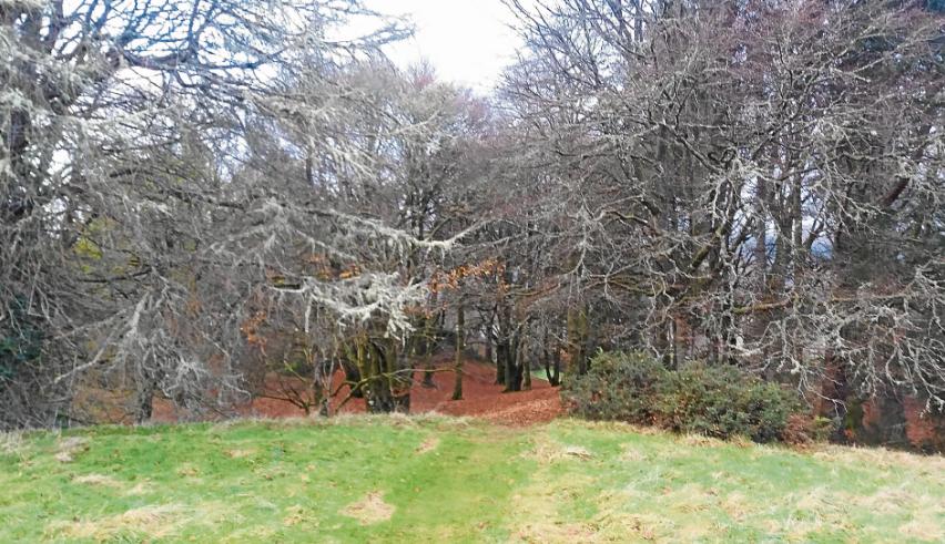 Highlands community project awarded £200,000 to preserve woodland