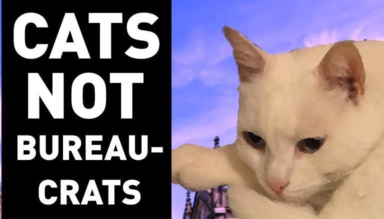 Aberdeen students want Buttons the Cat as University rector