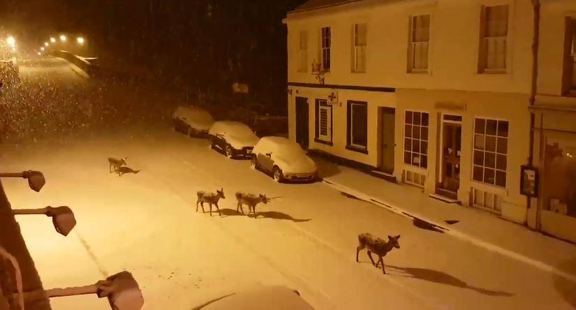 These deer were spotted taking a dander intoDunkeld town last night.