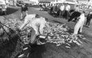 Fishermen picking up herring in Ullapool, 7 August 1981