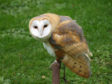 """""""Scamp"""", a six-year-old domesticated bird of prey, is believed to have been taken from his caged enclosure"""