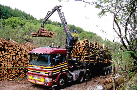 GROWING PLACES: Rural Secretary Fergus Ewing said the volume of timber harvested is predicted to rise 14%