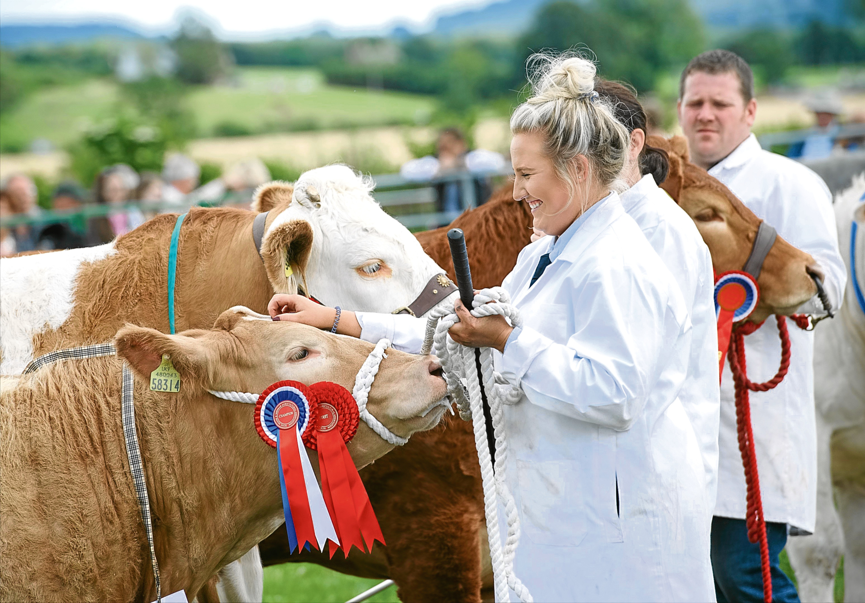 Champions lined up at last year's cattle interbreed contest at the Echt Show.