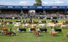 Livestock entries are up across the board.