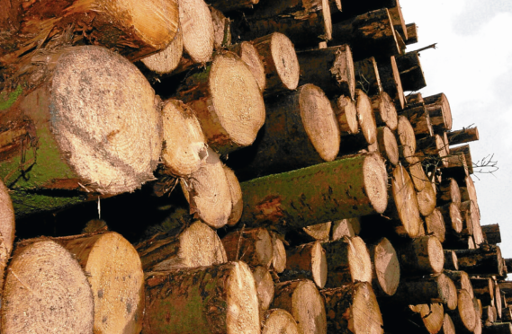 The forestry sector is worth almost £1 billion a year to Scotland