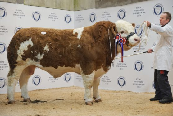 Blackford Hero sold for a new breed record for Thainstone at 13,000gn