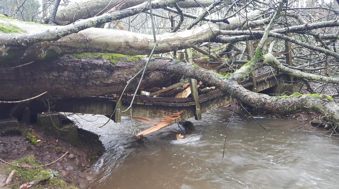 A fallen tree in Dunnottar wood