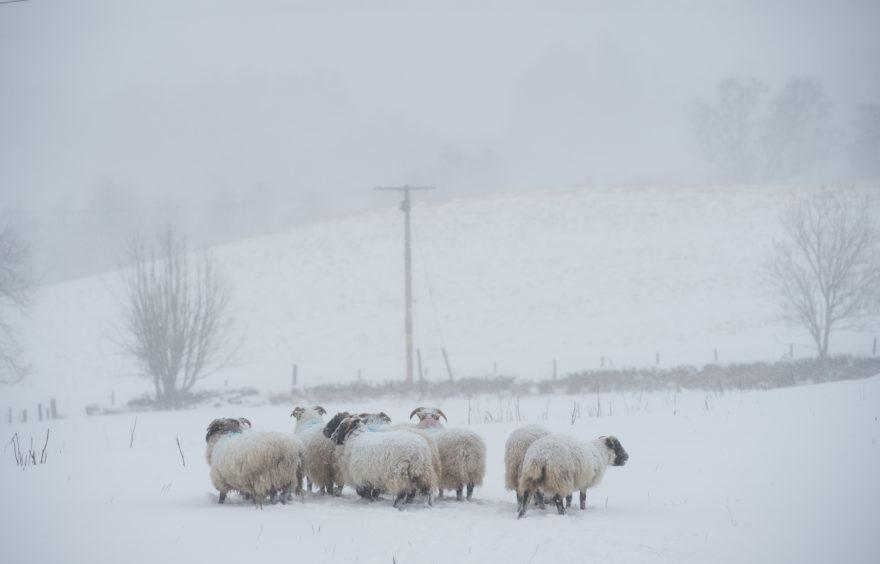 Picture by JASON HEDGES      Pictures show Snow Pics.