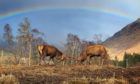 Stephen Davies captured two stags rutting under a rainbow at Glen Etive, Highland.