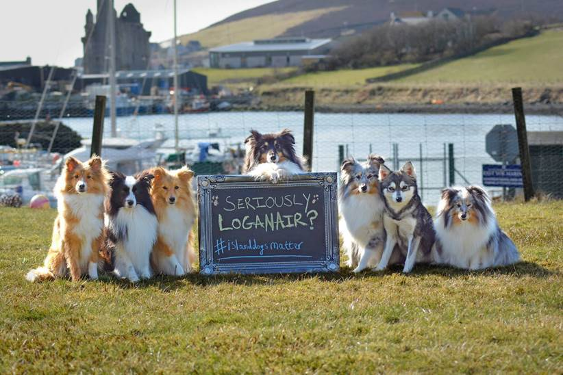 Shetland dog owners have criticised the move by airline Loganair. Picture: Kaylee Robertson