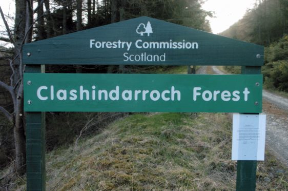 Clashindarroch Forest. Photograph: Peter Anderson