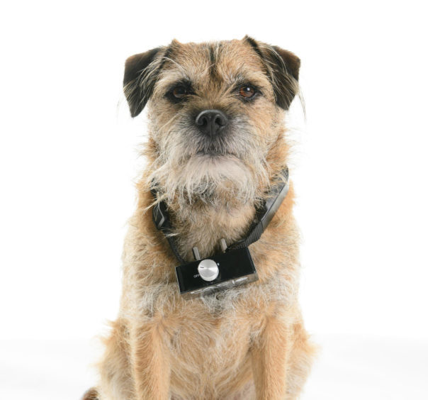"""Aberdeen South MP Ross Thomson has been campaigning for a """"comprehensive ban"""" on the use and sale of the collars, which claim to be a training aid, and has convinced UK Ministers to consult on the issue."""