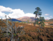 Mar Lodge Estate welcomes 5,000 different species and is home to more than 140 species of bird