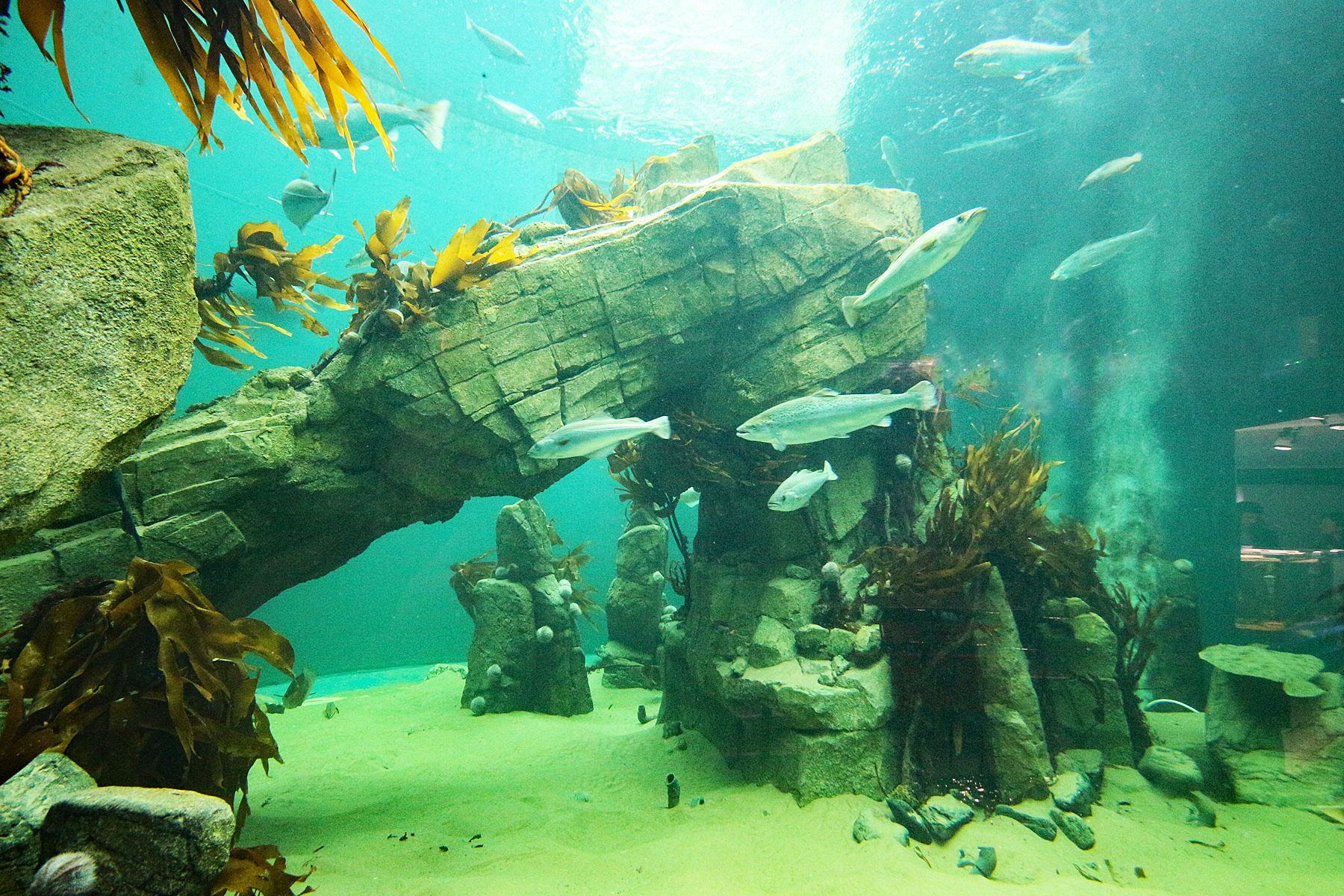 The spring rover ticket will be offered to visitors to Macduff Aquarium