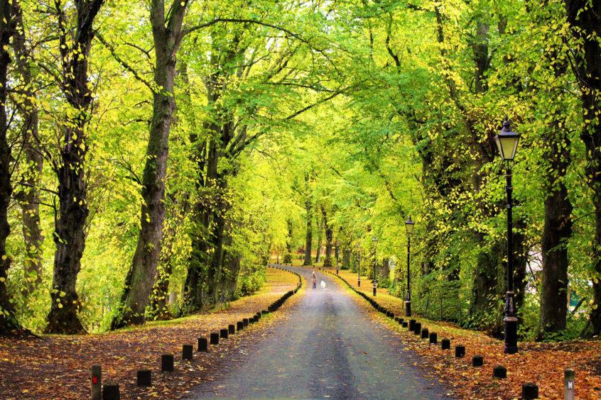 Autumn scene in Huntly